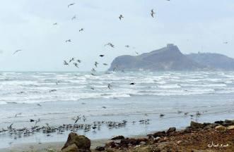 Aden-AmrGamal